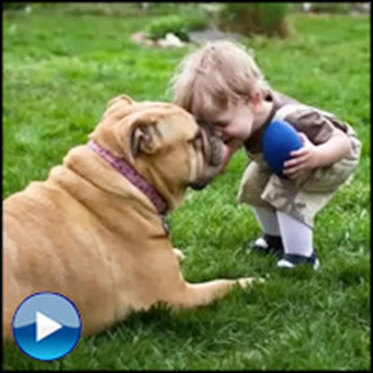 Wonderful Life Lessons Dog Teach Us