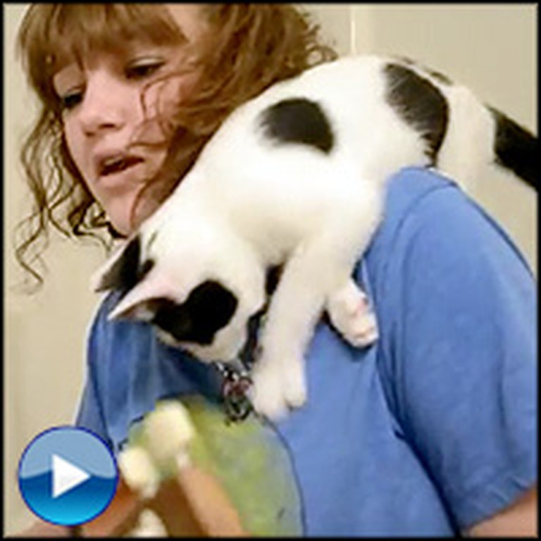 Curious Kitten Interrupts a Music Video -This is Too Funny!