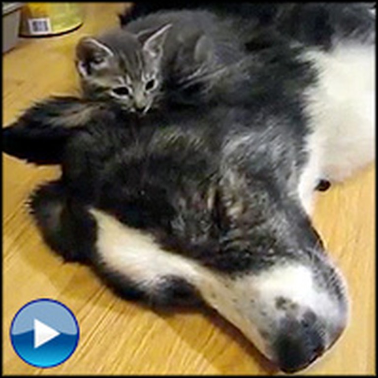 Tiny Kittens Find the Most Adorable Bed to Sleep On - Awww