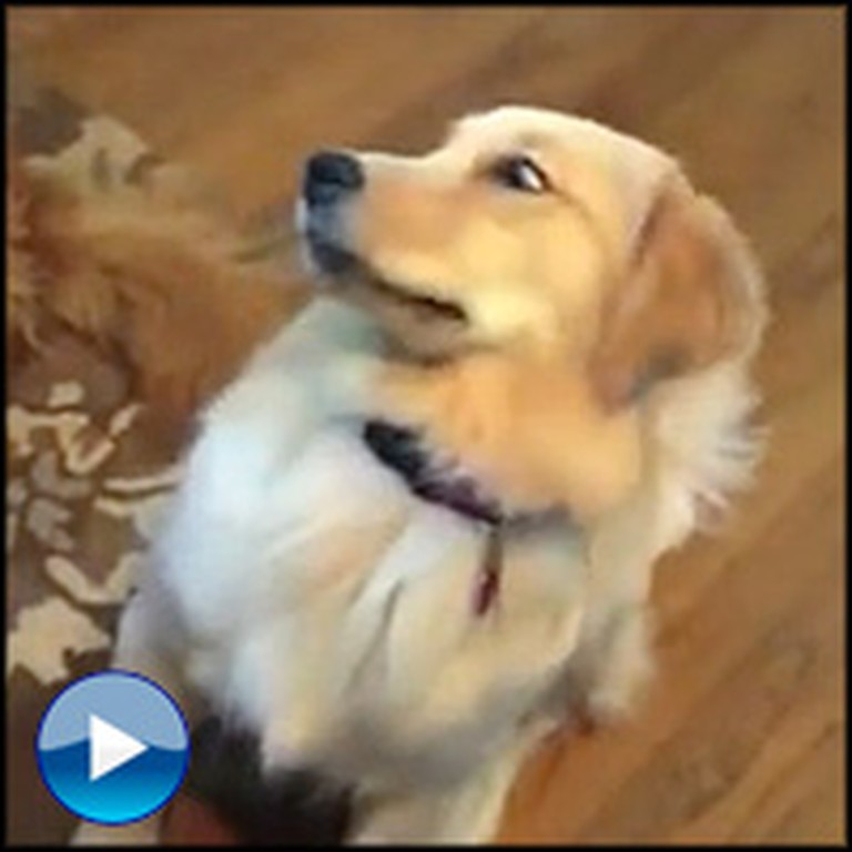 how to teach a dog to play catch