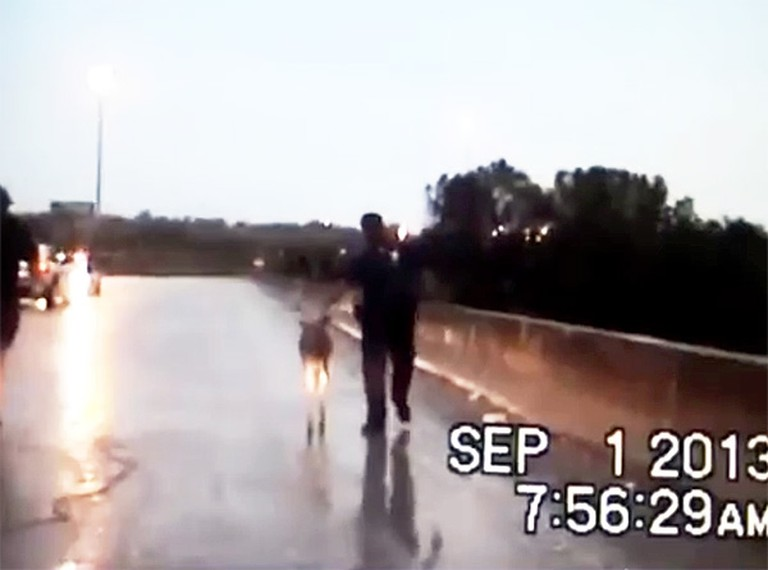 Helpful Police Officer Guides a Frightened Deer to Safety - So Heartwarming