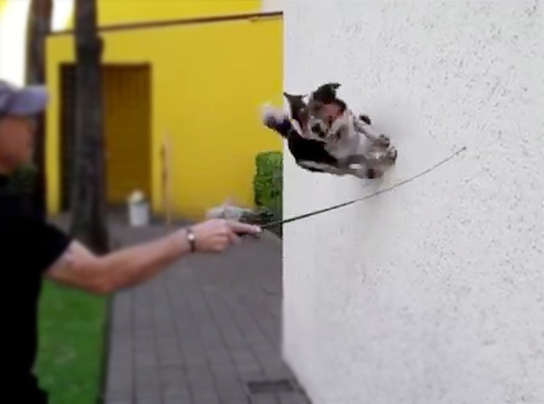 Smart Dog Knows Amazing Tricks You've Never Seen Before