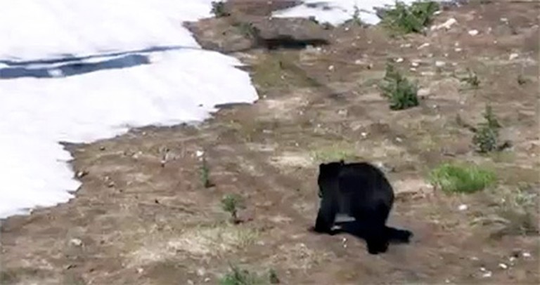 This is How Bears Have Fun in the Mountains - LOL, Too Funny