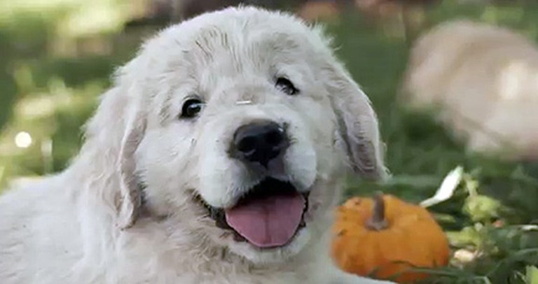 Watch These Fluffy Puppies Experience Autumn for the First Time - It'll Brighten Your Day :)