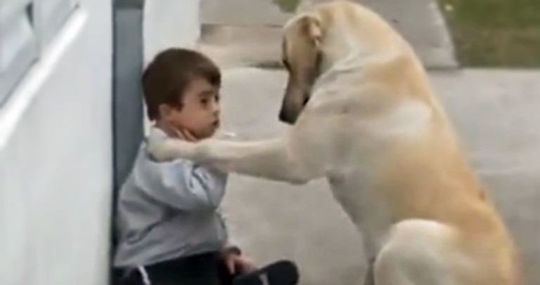 Loving Dog Takes Care of a Little Boy With Down Syndrome