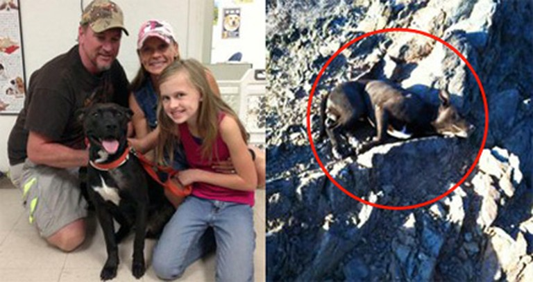 A Dog Shot and Left in the Mountains to Die was Carried Home by an Angel.