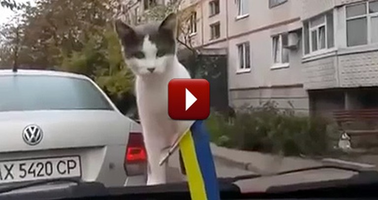 Very Curious Kitten Gets the Surprise of a Lifetime - LOL