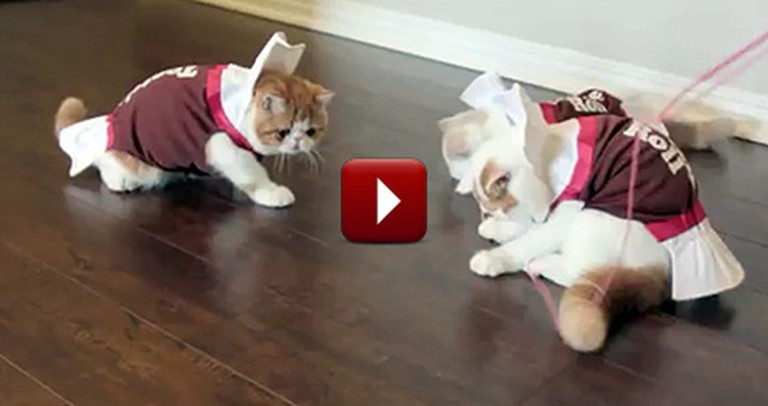 Kittens Dressed Up as Tootsie Rolls are the Cutest