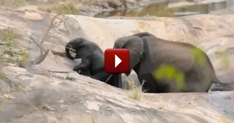 Mommy Elephant Rescues her Baby Stuck in a Pit