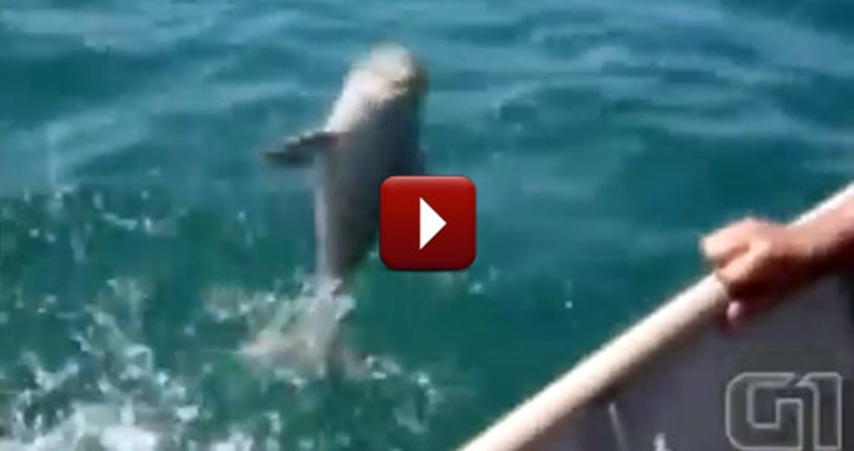 Fisherman Rescue a Baby Dolphin in Need... and Get the Most Wonderful Thank You