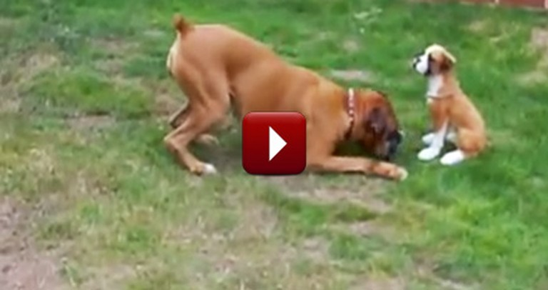 Hilarious Doggie Plays With the Funniest Thing - You'll Laugh So Hard