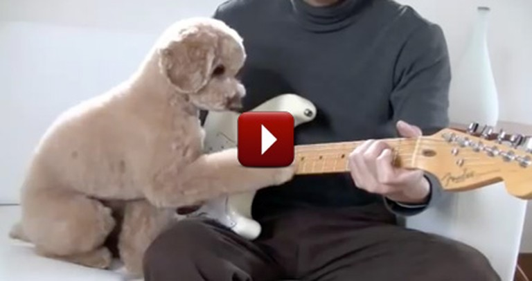 Adorable Doggie and Owner Have a Jam Session Together