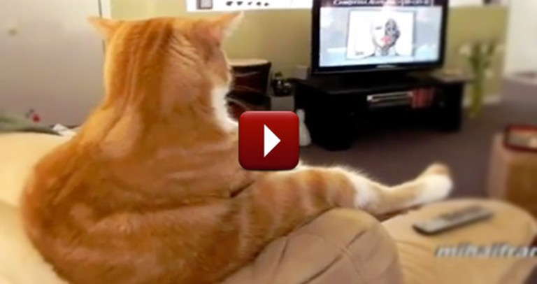 These Funny Cats Think They're People ... the Result is Hilarious