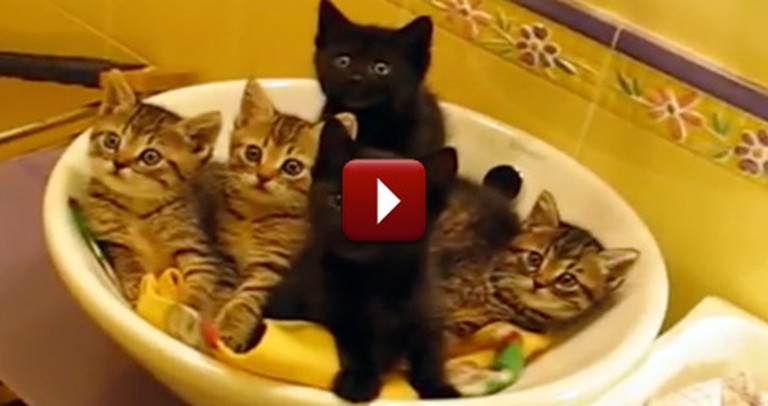 Five Synchronized Kitties Are the Cutest Thing You'll See Today