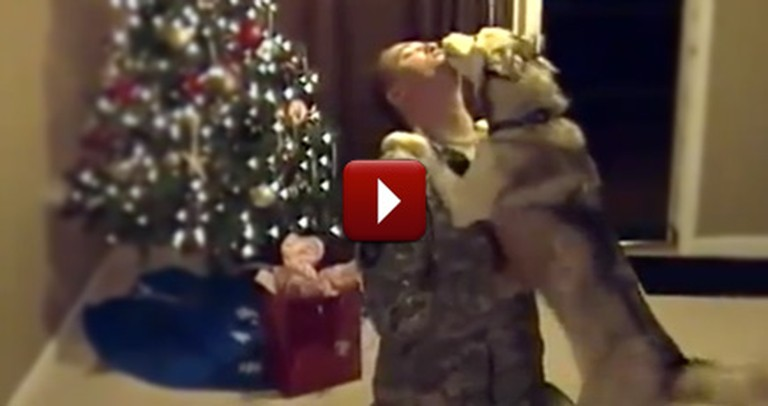 Siberian Husky Gets the Greatest Christmas Gift of All - Her Daddy