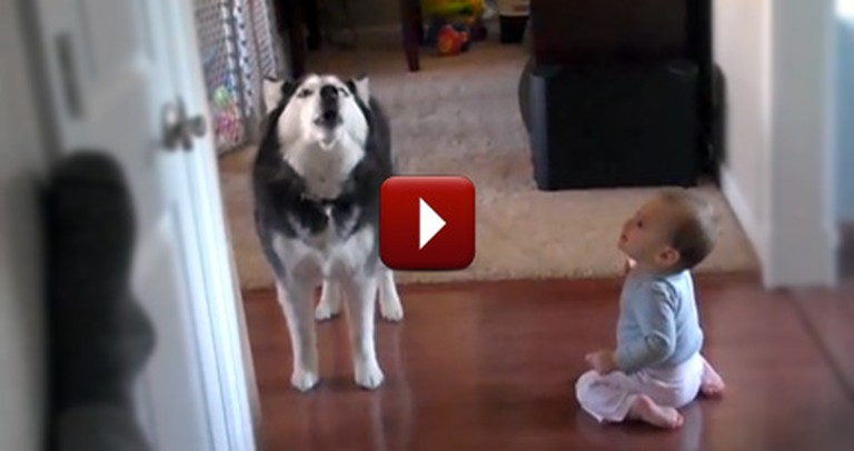 A Husky and Adorable Baby Sing Together