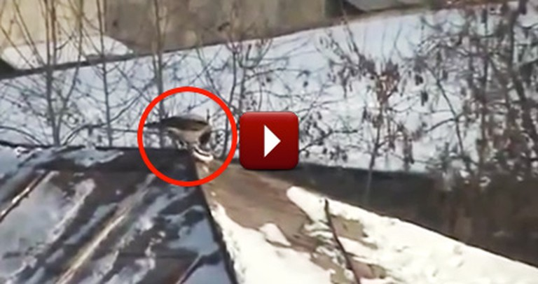 A Smart Crow Does Something Awesome After the First Snowfall