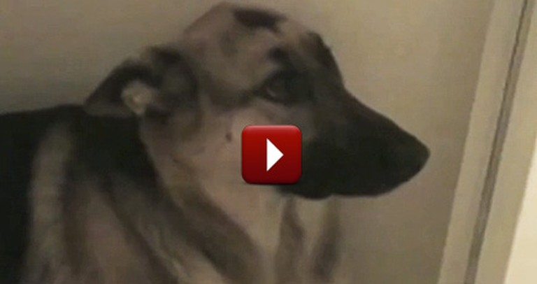 The Top 10 Guiltiest Dogs on the Internet