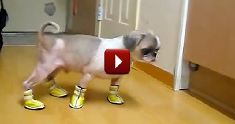 Watching a Compilation of Dogs Wearing Booties is a Hilarious Christmas Gift