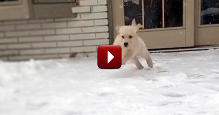 Watching This Puppy Play in His First Snow Will Make Your Day