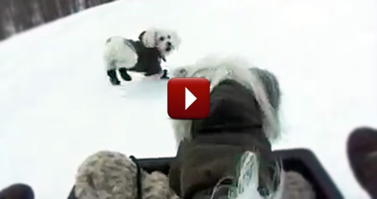 Sled Riding Puppies Will Put a Smile on Your Face