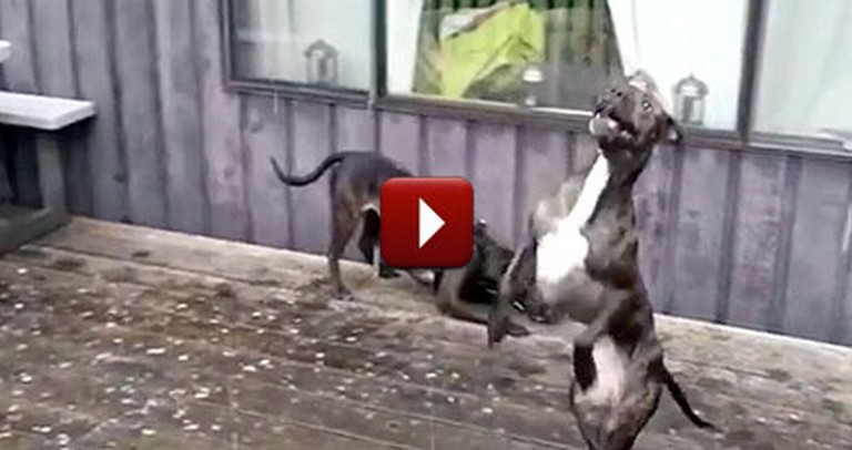 Silly Dogs Go Crazy When It Snows - So Cute