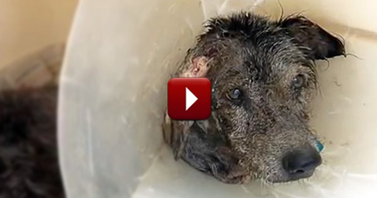 A Dog at Death's Doorstep Makes a Recovery Unlike Any We Have Seen Before