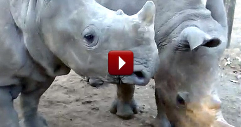 You'll Never Expect the Noises That Come Out of These Rhinos!
