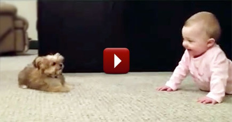 Adorable Puppy and Baby Have Their Own Language - Too Cute