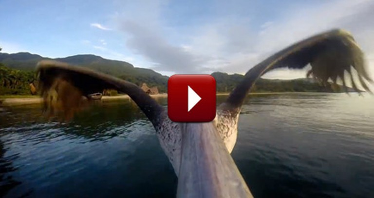 Watch as This Pelican Learns to Take Flight