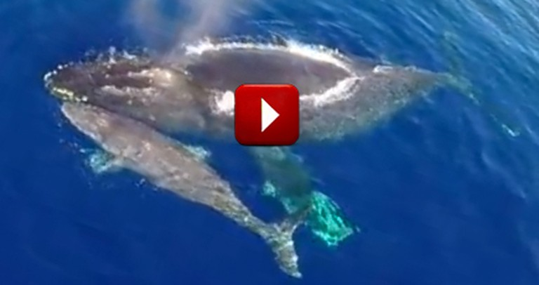 Man Thanks the Lord for This Jaw-Dropping Video of Dolphins Stampeding with Whales