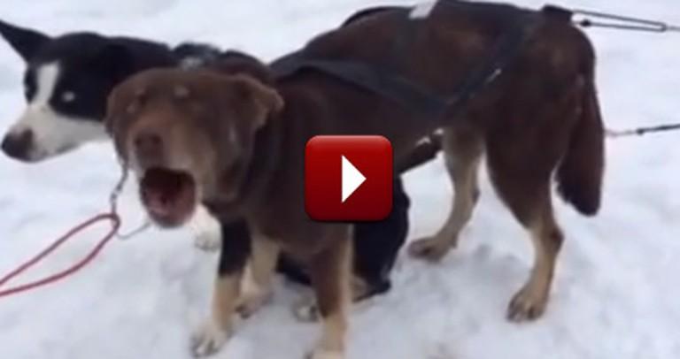 """Funny Dog Sounds Like He's Saying, """"Blah, Blah, Blah"""""""