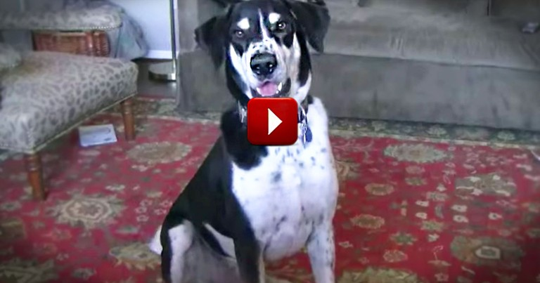 This Dog REALLY Wants a Fluffy New Friend. WHO He Wants Will Crack You Up!