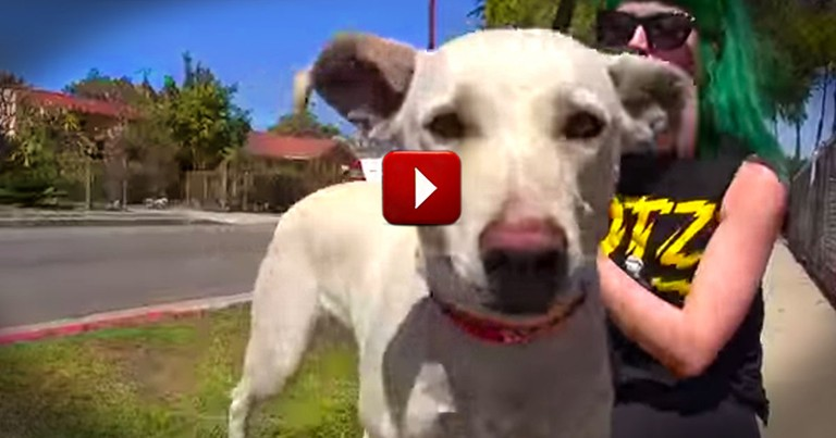 She Waited and Waited For Her Human To Return. And Her Gentle Patience Was Rewarded. Aww!