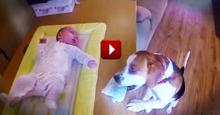 This Pup Proves He's MOM'S Best Friend. He Deserves Every One Of Those High Fives!