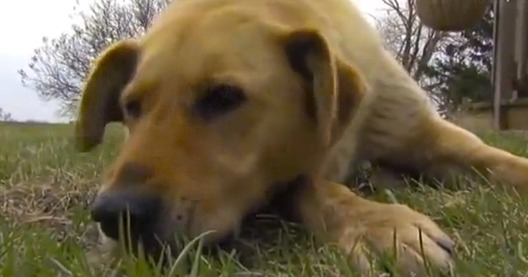 This Dog Found the Best Way to Repay the Family Who Rescued Him. He Saved Their Son!