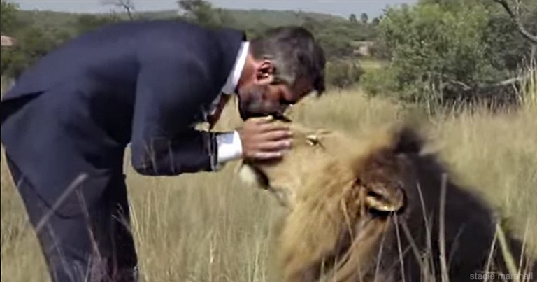This Man Isn't Just Caring for the Lions...He's PLAYING With Them.  This Looks Crazy, But Kinda Cool