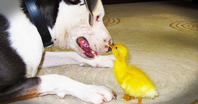 This Baby Was Abandoned by His Mother and Called an Ugly Duckling. Then Something Beautiful Happened