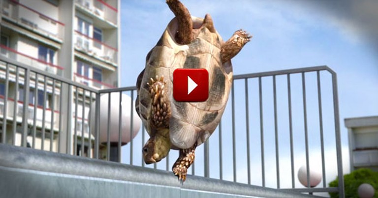 This Poor Turtle Had Me Worried At First. But His Big Ending Is Pure Silly Fun!