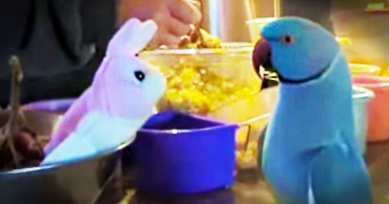 This Bird Just Got A New Friend And He Is In LOVE! Wait 'Til You Hear What He Says At 28 Seconds.