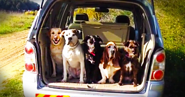 These Cute Pups Look Like They're Ready To Go-Go-Go! What They Do Next Is Such An Adorable Surprise!