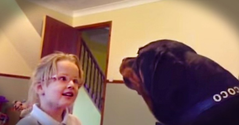 This Dog May Be Big, But His Heart's Even Bigger. Just Watch What He Does With His Little Human.