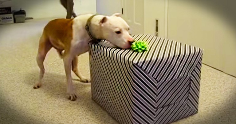 This Sweet Pup Turned 11 Years Old. Watching Him Open His Gifts Made ME Feel Like A Kid Again!