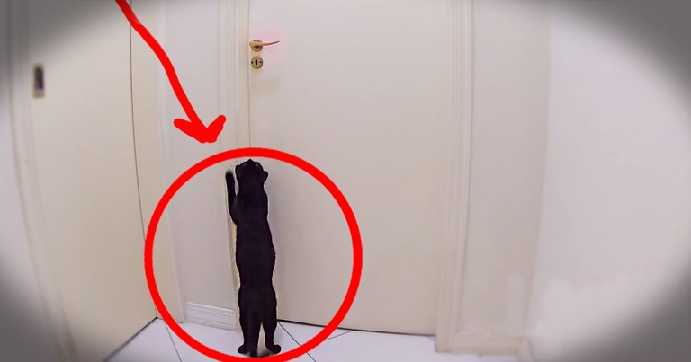 What This Kitty Does Next Is More Than Impressive, It Is Epic. I Wish My Kitty Could Do THIS!