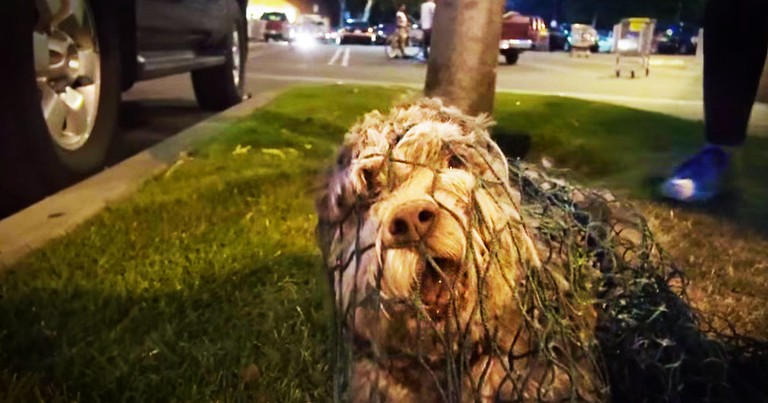 This Poor Dog Was Exhausted And Afraid. But This Dramatic Rescue Had The Sweetest Ending!