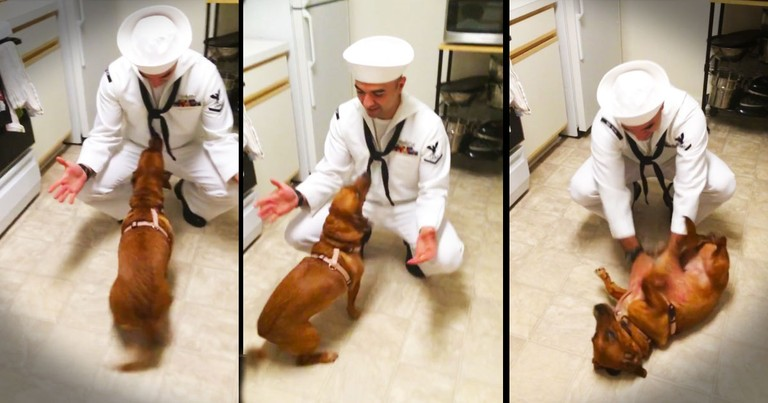 No One Welcomes Home A Sailor Better Than This Girlie! Her Excitement Made My Heart Skip A Beat.