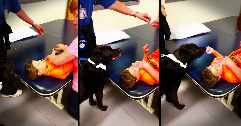 The Truth About What This Dog Did Just Melted My Heart. Those Giggles, You KNOW They Can Heal!