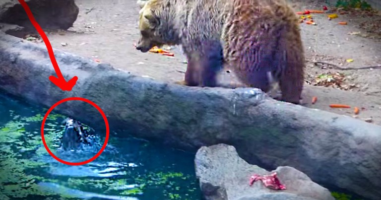This Crow Was Trapped Inches From A Bear . . . What Happened Next Completely Blew My Mind!
