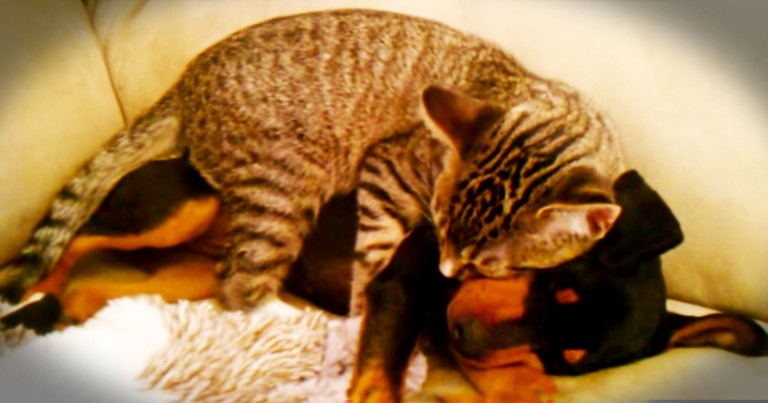 When This Puppy Was Hurting, His Kitty BFF Knew What To Do. This Act Of Kindness Is So Beautiful!