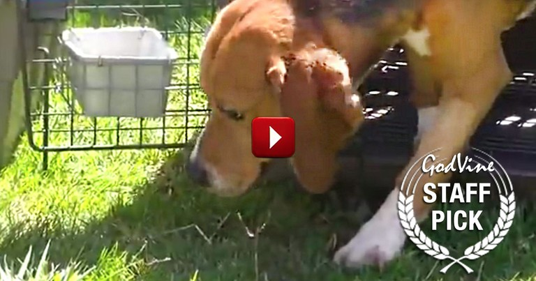 These Beagles Spent Their Lives As Lab Test Animals. And They Just Saw The Sun For The First Time!